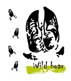 Silhouettes of traces of wild animals. Traces of a wild boar. Vector illustration Stock Photography
