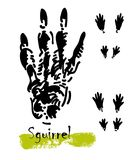 Silhouettes of traces of wild animals. Traces of a squirrel. Vector illustration Royalty Free Stock Image
