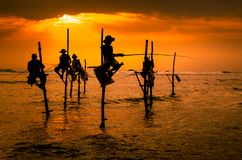 Silhouettes of the traditional fishermen. At the sunset in Sri Lanka Royalty Free Stock Photo