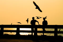 Silhouettes of traveler look at seagull. Stock Image