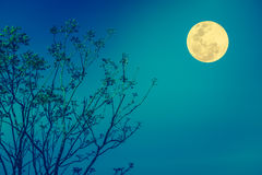 Silhouettes of tree against blue sky and beautiful full moon. Ou Stock Photo