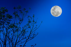 Silhouettes of tree against blue sky and beautiful full moon. Ou Royalty Free Stock Images