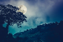 Silhouettes of tree against night sky and bright moon. Outdoor. Royalty Free Stock Images