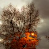 Tree silhouettes against the colorful evening sky royalty free stock photo