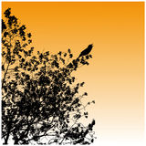 Silhouettes, tree, bird Stock Image