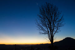 Silhouettes of tree at blue sky sunrise on the horizon. Royalty Free Stock Images