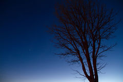 Silhouettes of tree at blue sky sunrise on the horizon. Royalty Free Stock Photo