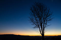 Silhouettes of tree at blue sky sunrise on the horizon. Stock Photo