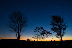 Silhouettes of tree at blue sky sunrise on the horizon. Royalty Free Stock Image