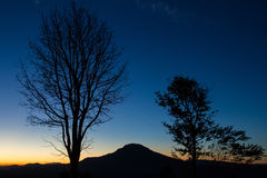 Silhouettes of tree at blue sky sunrise on the horizon. Stock Photos