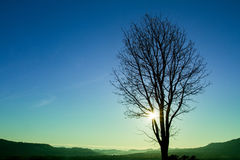Silhouettes of tree at blue sky sunrise on the horizon. Stock Photography