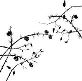 Silhouettes of tree branches Stock Photos