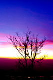 Silhouettes of tree branches and light Twilight Stock Photos