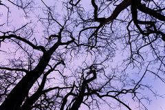 Silhouettes tree branches with sky. Sunset. Background for desig Stock Photo
