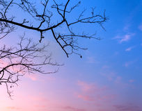 Silhouettes tree branches with sky. Sunset. Background for desig Stock Image