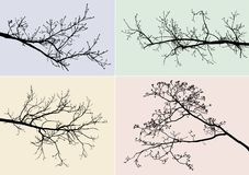 Silhouettes of tree branches Stock Photography