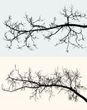 Silhouettes of the tree branches Stock Photo
