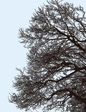 Silhouettes of tree branches in winter stock photos