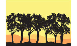 Silhouettes of tree lined Stock Images
