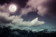 Silhouettes of tree and nighttime sky with clouds, bright full m. Oon would make a great background. Beauty of nature. The moon were NOT furnished by NASA. Cross royalty free stock image