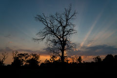 Silhouettes of Tree with sunset background Royalty Free Stock Images