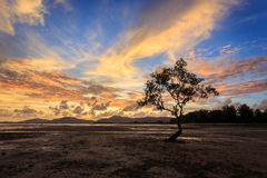 Silhouettes of tree at sunset beach in Phuket Stock Photography