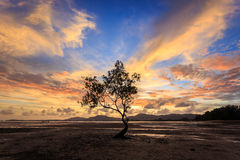 Silhouettes of tree at sunset beach in Phuket Stock Photos