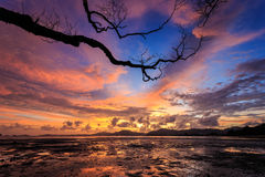 Silhouettes of tree at sunset beach in Phuket Stock Image