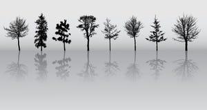 silhouettes treen Arkivbild