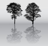 silhouettes treen Arkivbilder