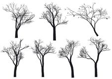 silhouettes treen Royaltyfria Bilder