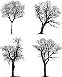 Silhouettes of trees. Vector drawing of silhouettes of various trees vector illustration