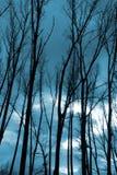 silhouettes trees Royaltyfria Foton