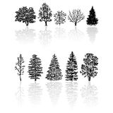 Silhouettes trees. Different kind of silhouettes trees isolated over white Royalty Free Stock Photography