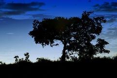 silhouettes trees Royaltyfri Foto