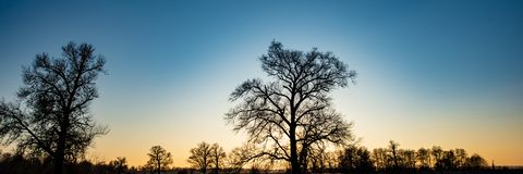 silhouettes of trees against the evening sky. stock image