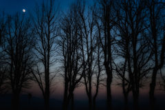 Silhouettes of trees Royalty Free Stock Photos