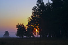 silhouettes of trees on the field against the evening sky Stock Photo