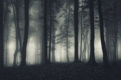 Silhouettes of trees through the fog Stock Images