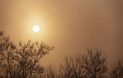 Silhouettes of trees in fog with sun behind. Silhouettes of trees in fog stock photography