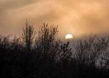 Silhouettes of trees in fog with sun behind. In a morning stock photo