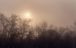 Silhouettes of trees in fog with sun behind. In a winter day stock image
