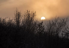 Silhouettes of trees in fog with sun behind. In a winter day royalty free stock photos