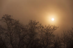 Silhouettes of trees in fog with sun behind. In a winter day royalty free stock image