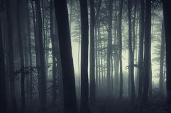 Silhouettes of trees in a forest with fog Stock Image