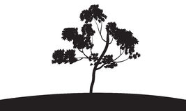 Silhouettes of trees grow. Silhouettes of  trees grow in fields Royalty Free Stock Image