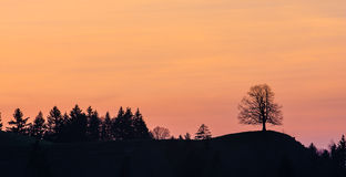Silhouettes of trees on a hill in Swiss Alps.  stock photos