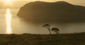 Silhouettes of trees on the island of Askold Stock Photo