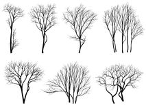 Silhouettes of trees without leaves. Stock Images