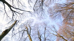 Silhouettes of trees without leaves against the blue sky. Panorama 1980х1080 stock footage